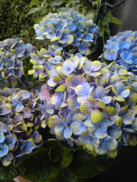お花とココア